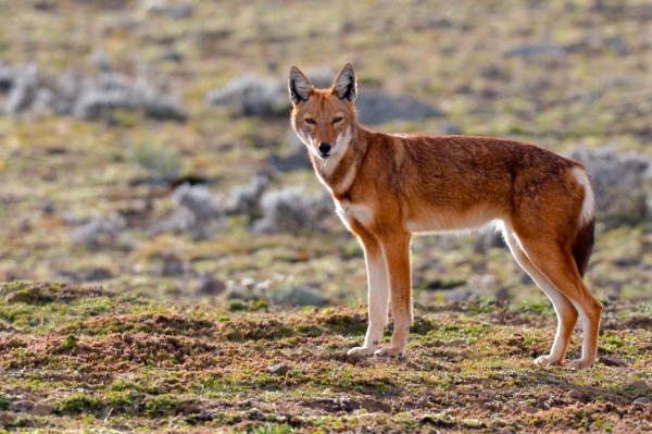 Sleduj online Dokument, Přírodní svět Příběhy zvědavých přírodovědců na ČT2!