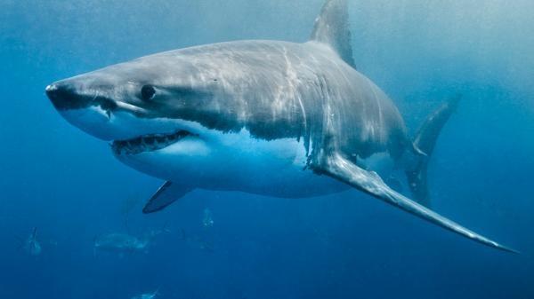 Sleduj online Dokument, Přírodní svět Když žraloci útočí na Prima ZOOM!