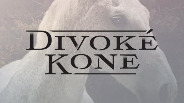 Divoké koně