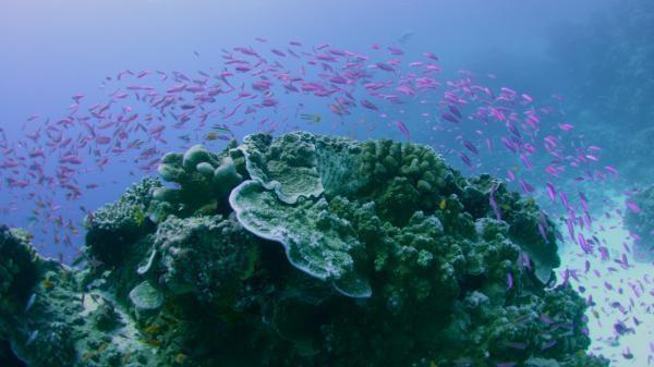 Sleduj online Přírodní svět Divy Velkého bariérového útesu na Prima ZOOM!