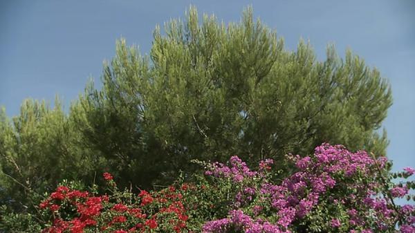 Oglądaj online přírodní svět Menorca plná záhad a vzrušujících tradic w