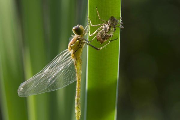 Sleduj online Přírodní svět Metamorfóza: Zázrak přírody na Prima ZOOM!