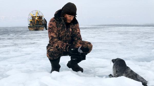 Sleduj online Přírodní svět V říši jezerních tuleňů na !