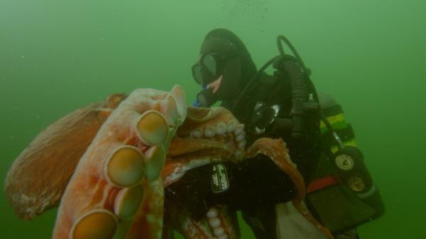 Dokument Člověk proti chobotnici