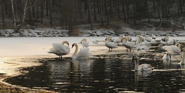 Sleduj online Přírodní svět Novinky z přírody na ČT :D, ČT2!
