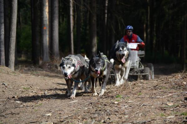 Sleduj online Sport Sport v regionech: Mushing pod věží, Radíkov na !
