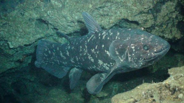 Sleduj online Přírodní svět Živá fosilie na !