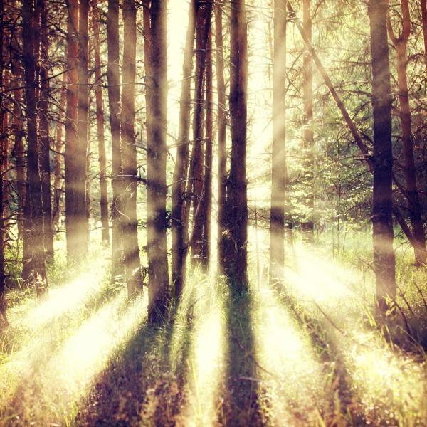 Sleduj online Přírodní svět Rovina, hmly a biela farba na !