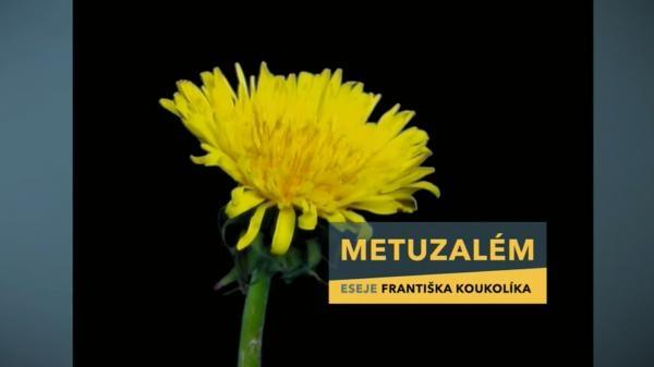 Sleduj online Vzdělávací Metuzalém na ČT2!