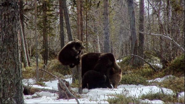 Sleduj online Přírodní svět Krásy divokého Norska na !